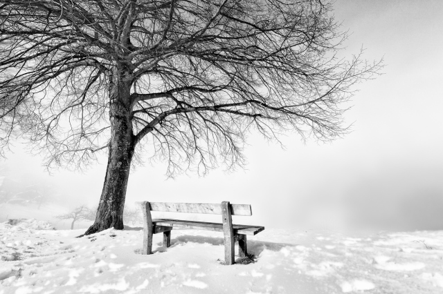 bench, foggy winter day